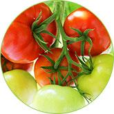 tomatini-home